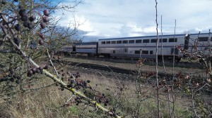 Amtrak's Coast Starlight heads north out of Albany on the Union Pacific main line. Would coal trains lead to expanding the line's capacity?