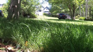 Could we learn to like tall grass?