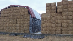 Huge stacks of straw -- a result of no field burning.