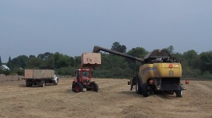 Harvest work goes on in a field off Bryant Drive outside of Albany Thursday.