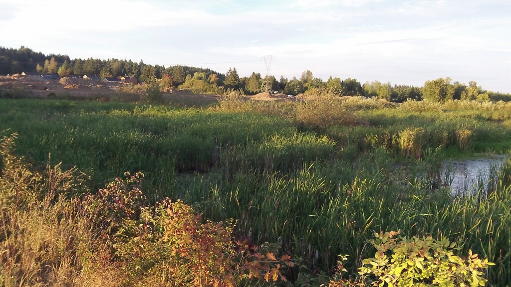 There's construction on the horizon, but this wetland is protected in the middle of Benton Woods.