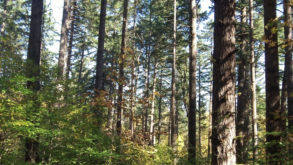 Wyden's bill says it would require science-based forestry.