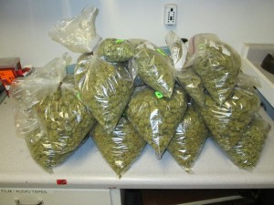 Marijuana seized by the state police.