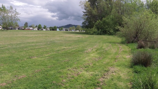 This little-use portion of Timber Linn Park is where a dog park might go.