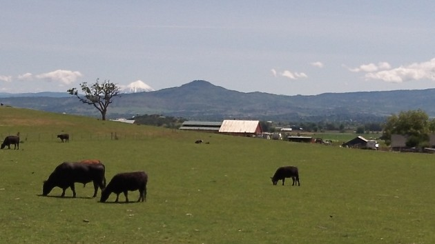 Cattle grazing in Southern Oregon need not worry about protecting liberty, but we should. (How's that for making use of a completely unrelated photo?)