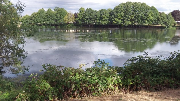 Looking across Waverly Lake; brambles in the foreground, algae in the middle.