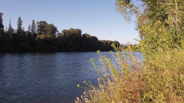 The Willamette near Albany: How much will new rules help?
