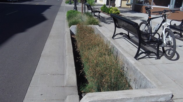 Features like this on Broadalbin Street are intended to collect and filter runoff from the street.