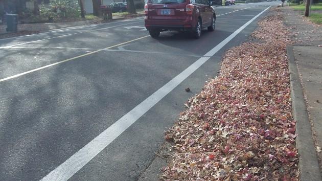 bike lane leaves 005