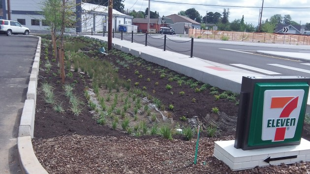 Swales like this in the Man Street project will collect runoff -- when and if the rains resume.