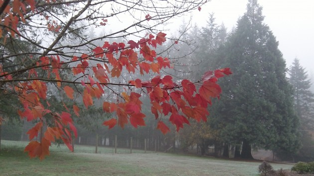 Fog and dying leaves: A melancholy time for thinking of picture IDs.