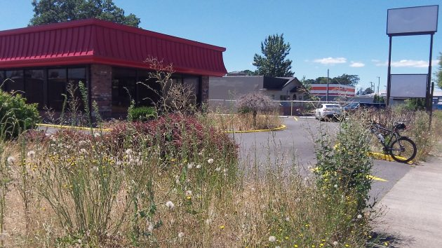 Nobody has been tending the landscaping at the former Wendy's for a long time.