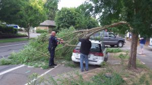 Police Sgt. Steve Dorn helps clear away sawn-off branches.