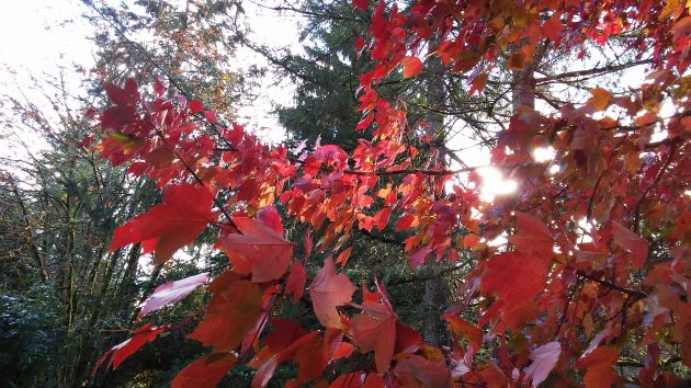 A burst of sunshine in October seemed symbolic of the Portland verdicts.