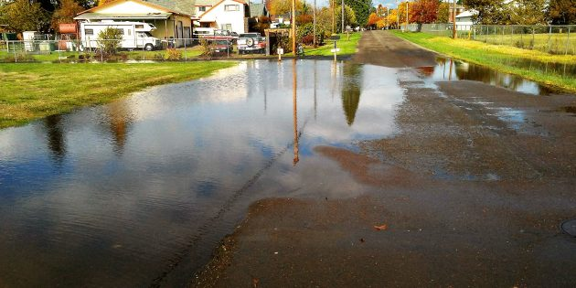 The Broadway Street pond on the afternoon of Oct. 27.